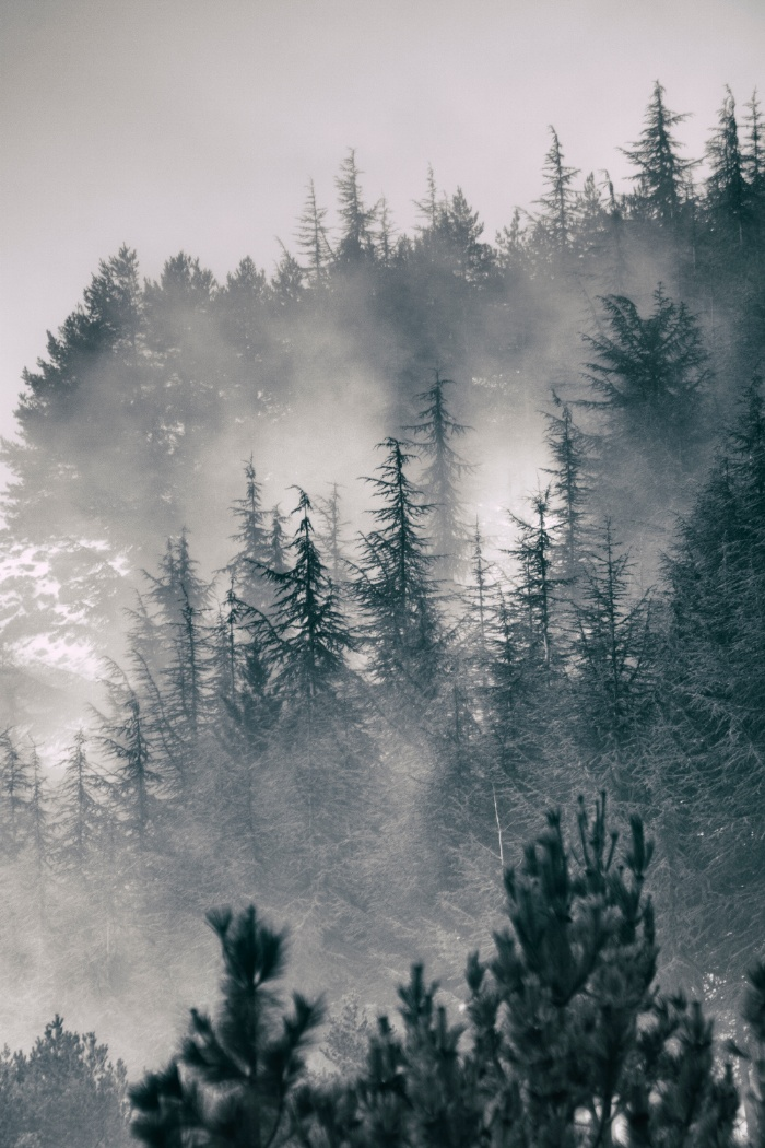 Sunday's Society6 - Guido Montanes, Mountain light II foggy forest