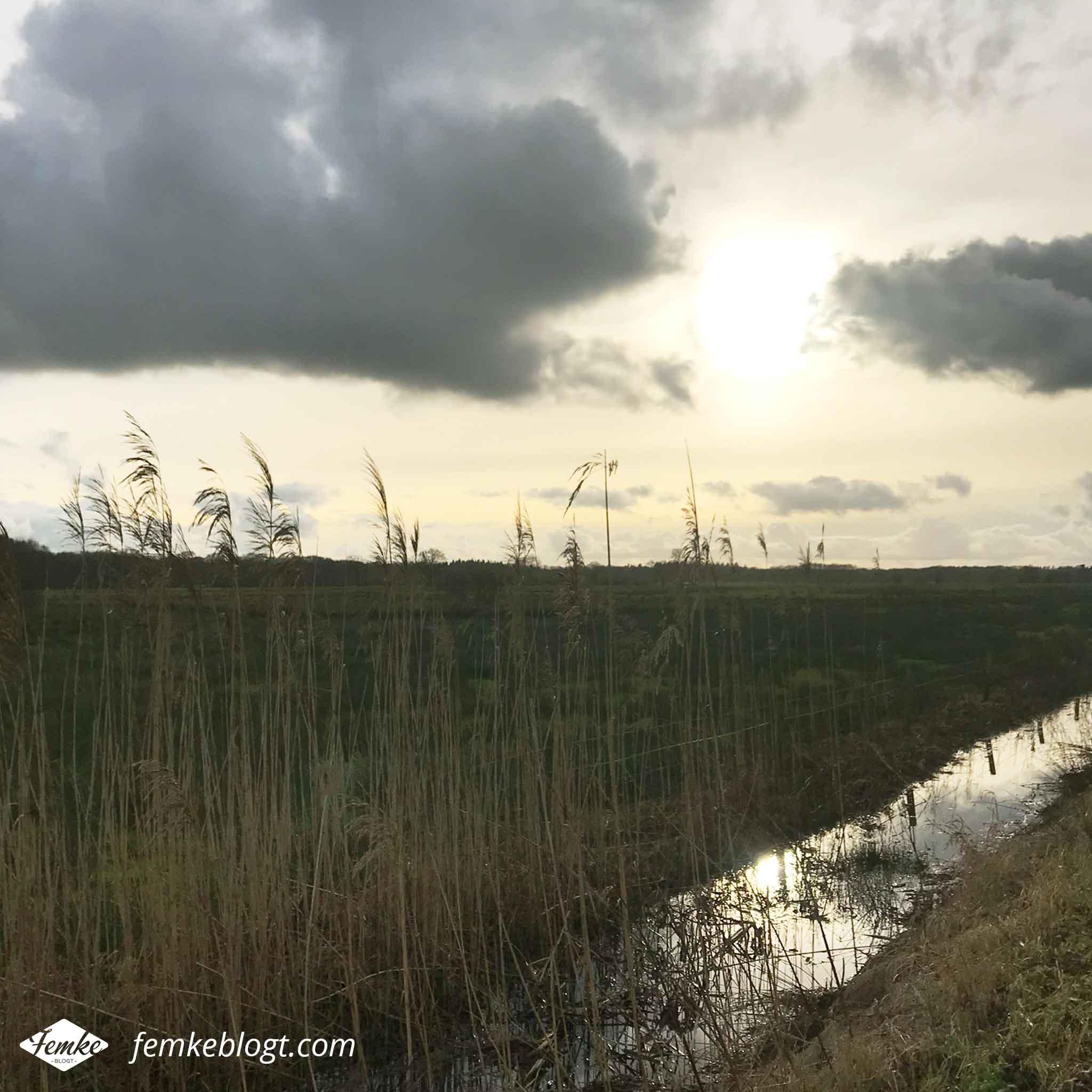 Maandoverzicht januari | Lekker wandelen langs de Vecht