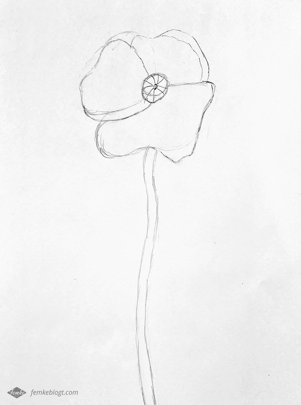31 Dagen bloemen   Klaproos proces tekening