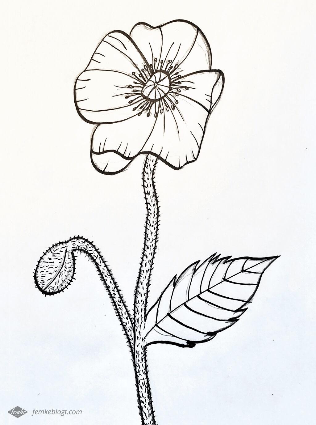 31 Dagen bloemen   Proces tekening klaproos