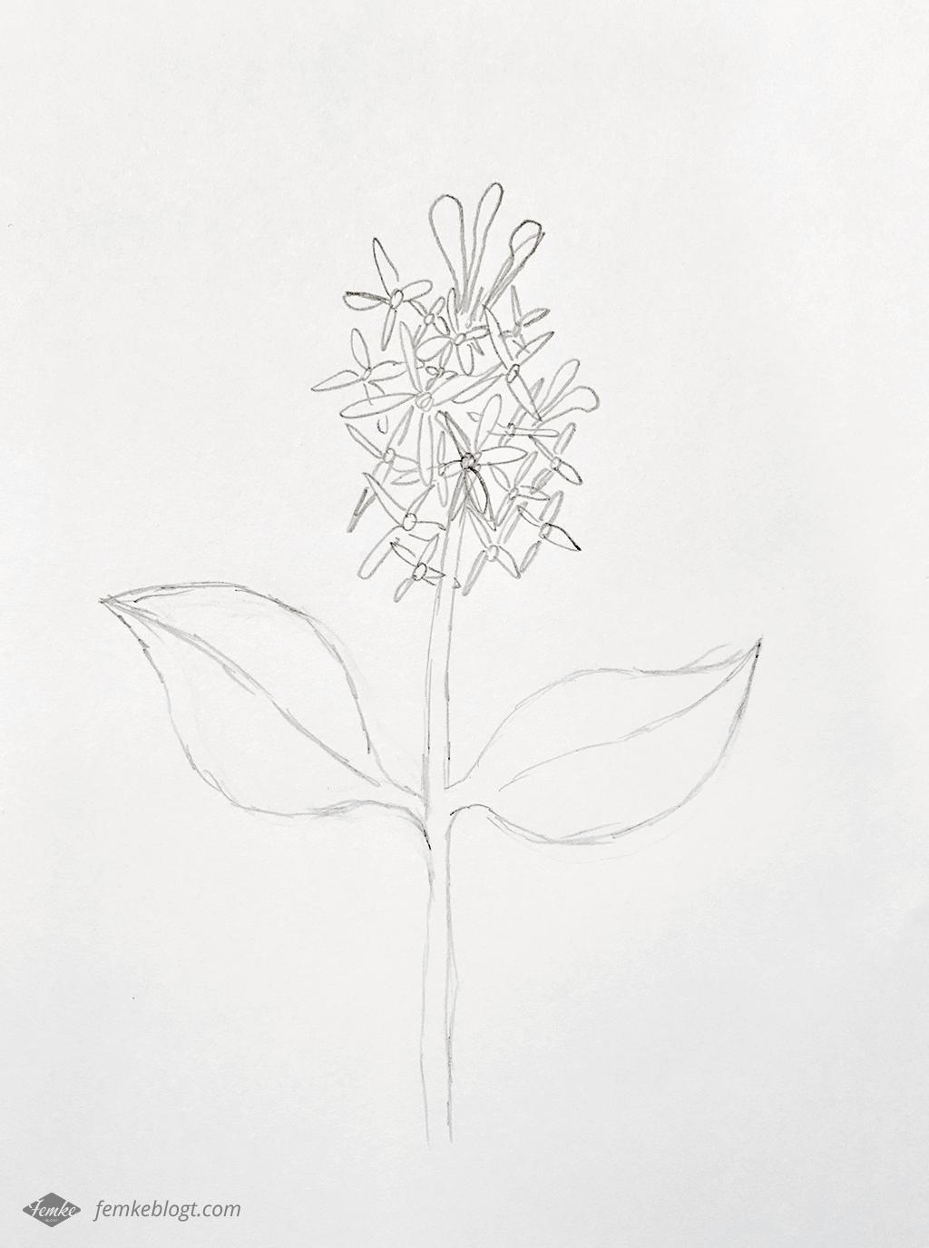 31 Dagen bloemen | Sering tekenproces