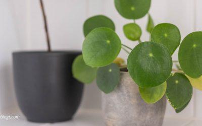 11x Inspiratie voor de leukste planten in huis