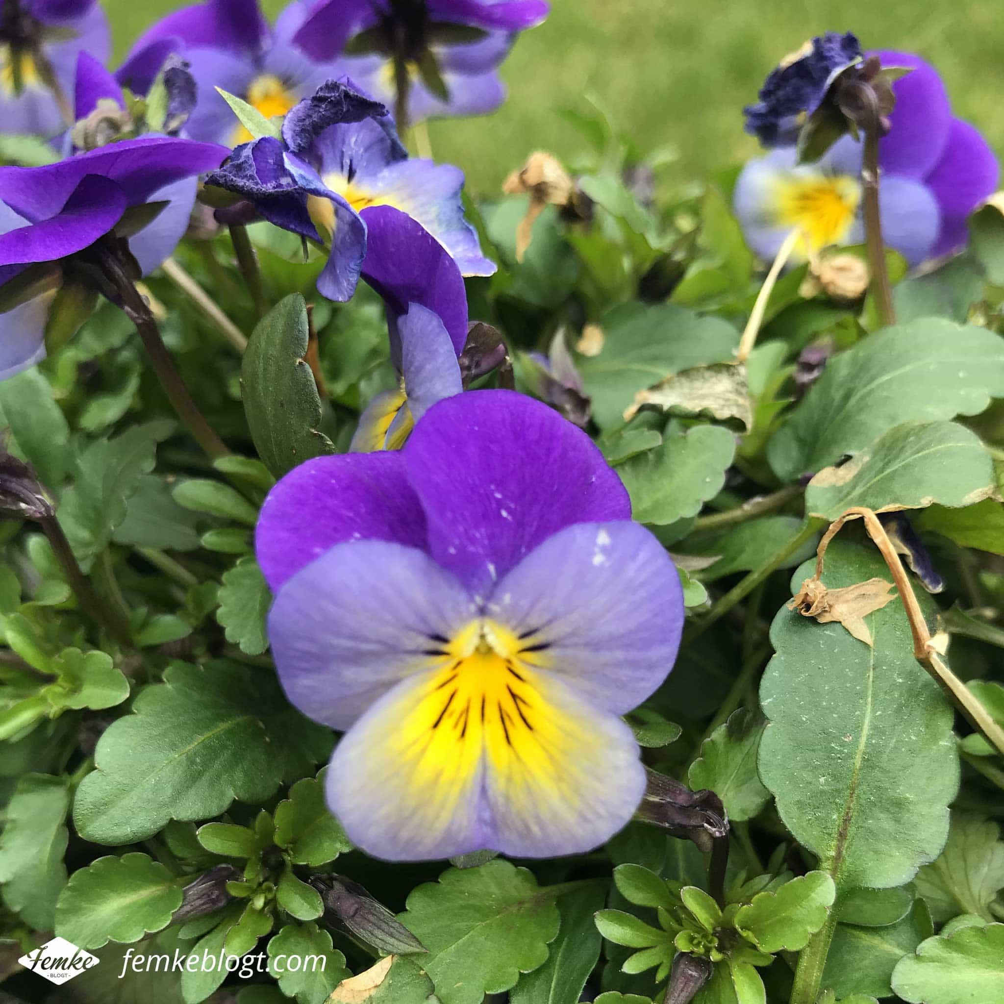 Maandoverzicht maart | Lente, viooltjes in de tuin!