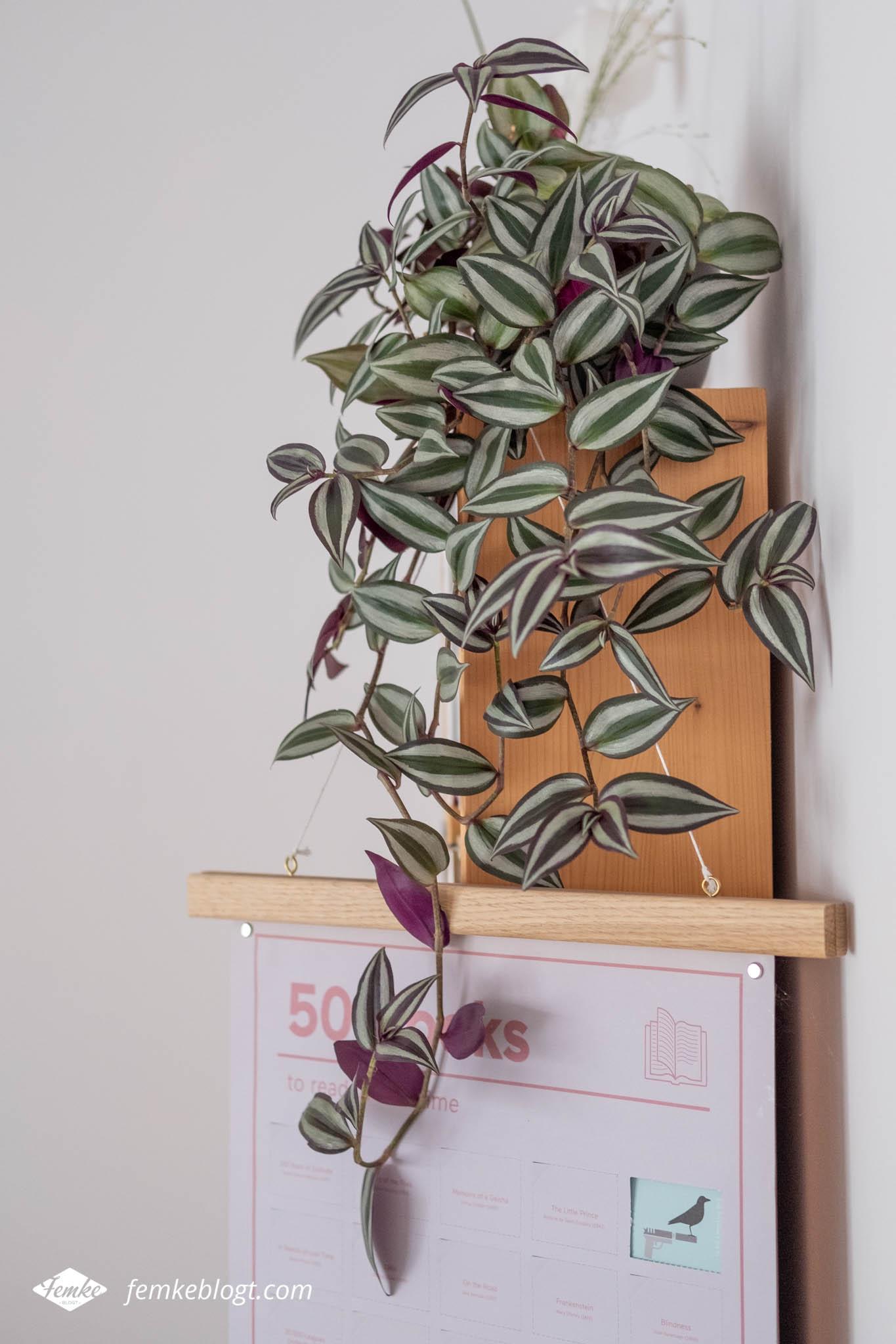 Hangplanten in huis - Tradescantia Nanouk (vaderplant)