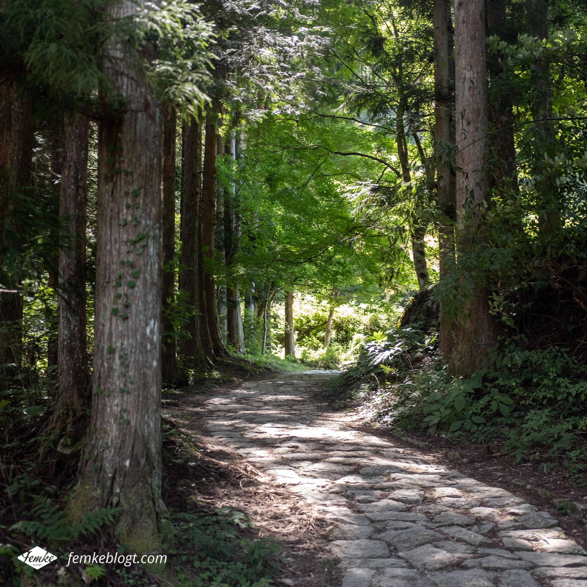 Nakasendo trail bospaadje