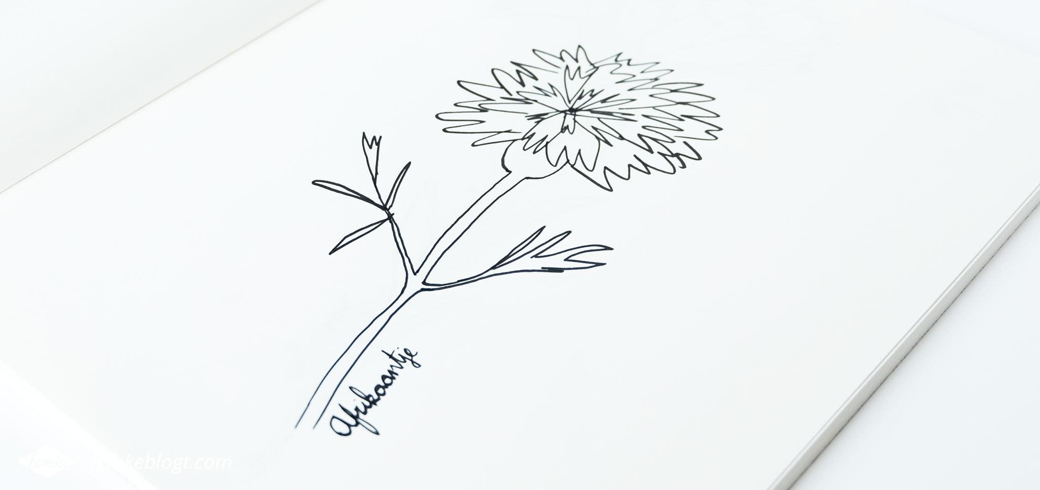 31 Dagen bloemen #7 – Afrikaantje